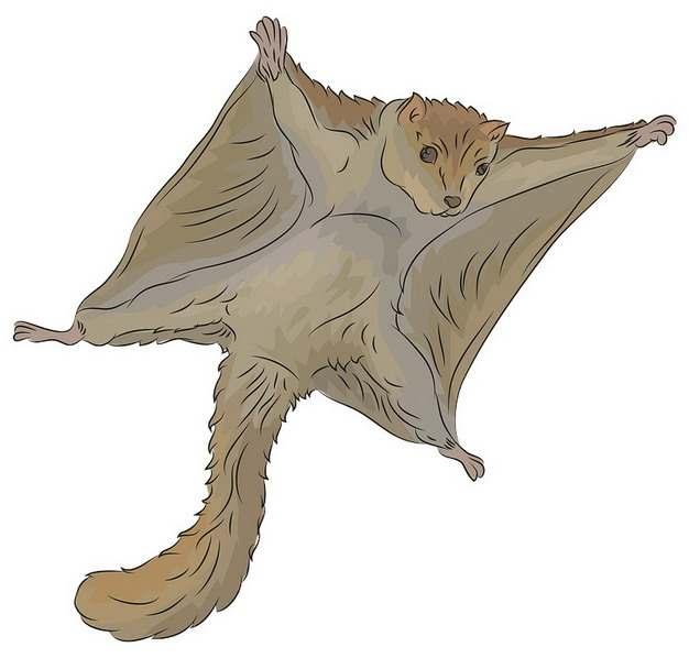 滑翔中的寒号鸟复齿鼯鼠卡通动物172010png图片素材