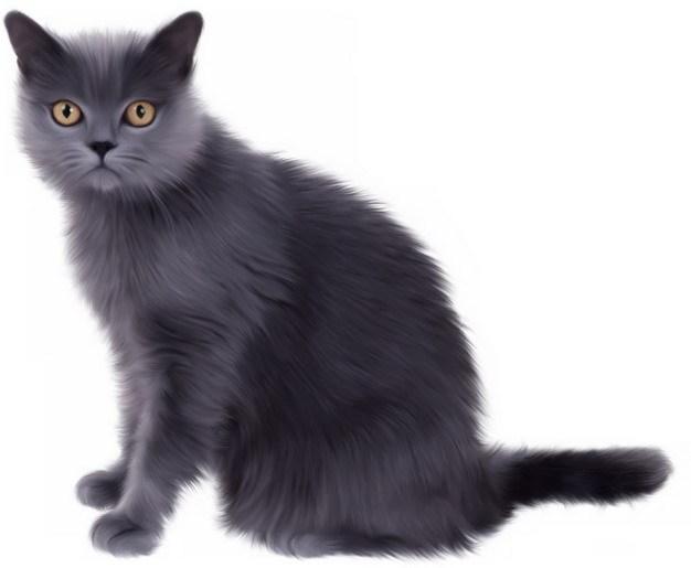 可爱的猫咪俄罗斯蓝猫664122png图片素材 生物自然-第1张