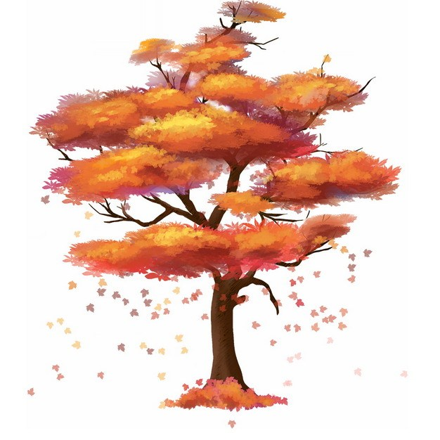 秋天火红色树叶的大树水彩插画747285png图片免抠素材 生物自然-第1张