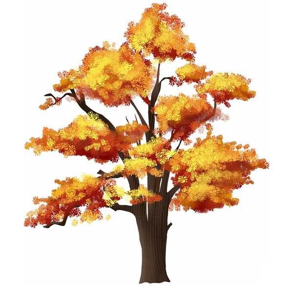 秋天金黄色树叶的大树银杏树水彩插画749263png图片免抠素材