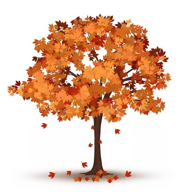 秋天橙色的树叶和大树488079png图片免抠素材 生物自然-第1张