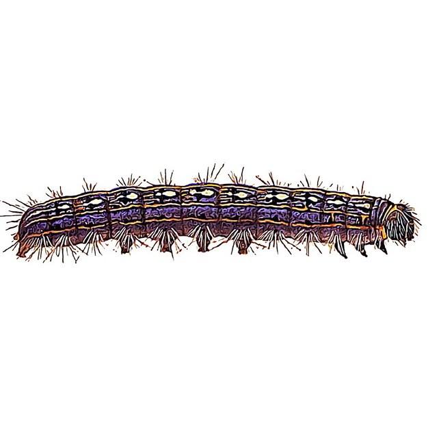 一只毛毛虫松毛虫130731png图片素材 生物自然-第1张