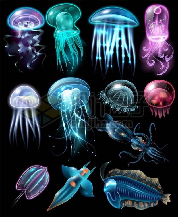 12款发光的水母乌贼冰海小精灵等漂亮的发光海鱼987161png矢量图片素材