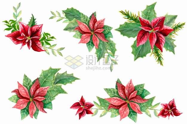 6款一品红花朵和叶子红色鲜花png图片素材