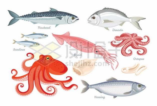 三文鱼乌贼章鱼鱿鱼等海洋鱼类269696矢量图片免抠素材