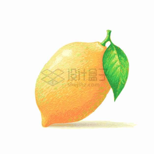 橙色的柠檬美味水果水彩插画png图片素材