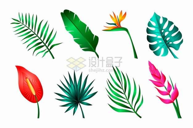 红掌花鹤望兰芭蕉叶等热带花卉花朵鲜花叶子png图片素材