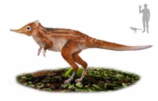 长鼻跳鼠远古哺乳动物295728png免抠图片素材
