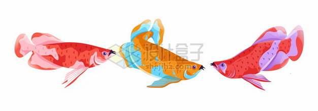 三款彩色金龙鱼名贵观赏鱼965996png免抠图片素材