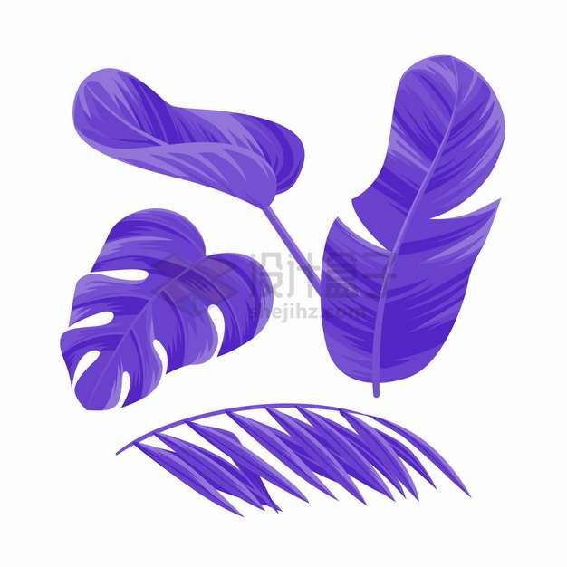 紫色的芭蕉叶等热带叶子png图片素材