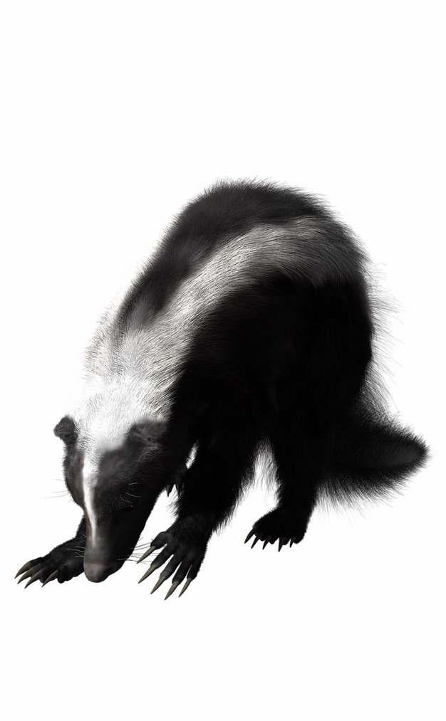 一只臭鼬野生动物831702png免抠图片素材