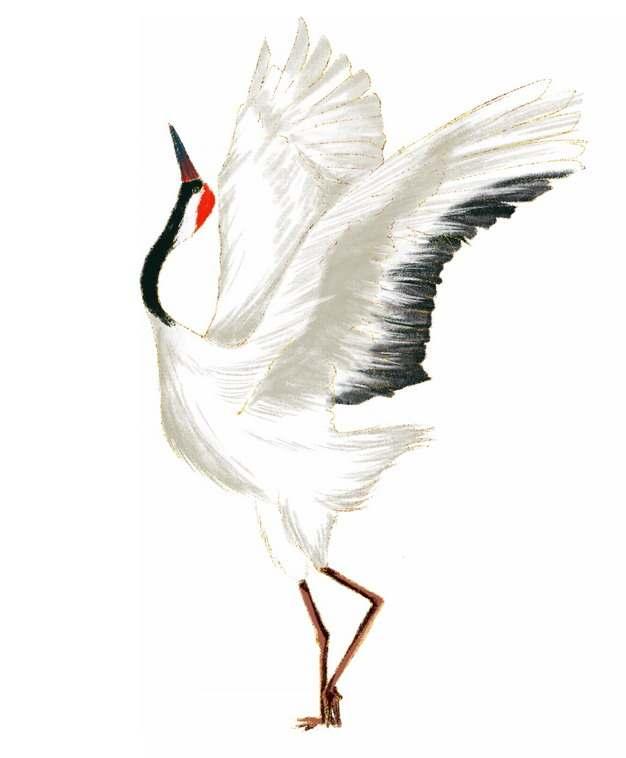 振翅的优雅丹顶鹤仙鹤手绘插画658360png图片免抠素材