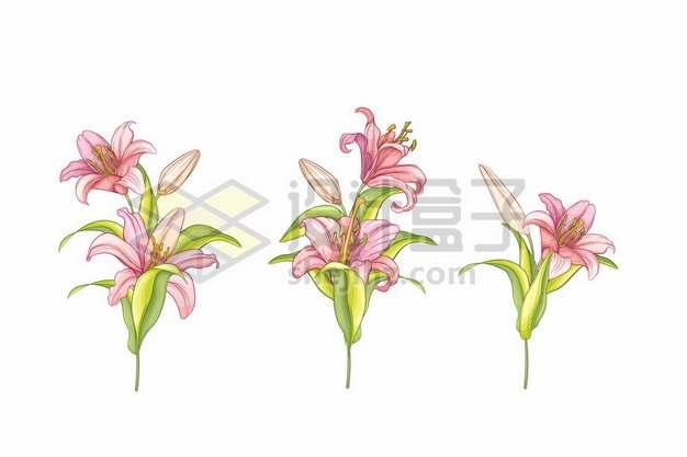 紫萼美丽花朵手绘插画694105png免抠图片素材