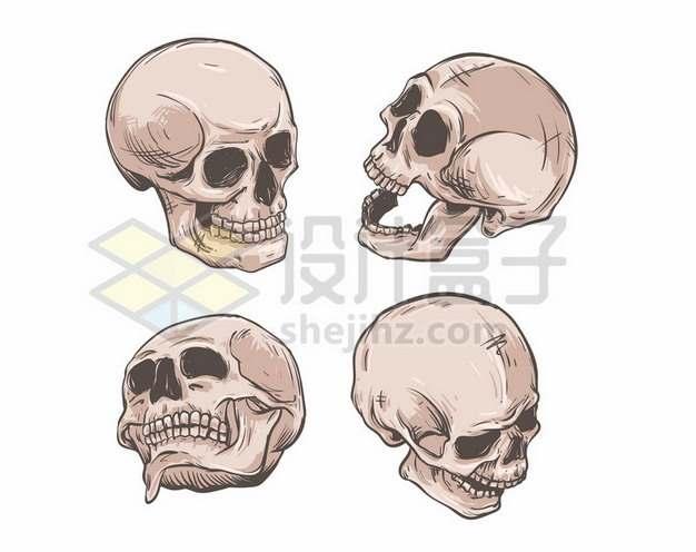 人类头盖骨骷髅头四个不同角度731117矢量图片免抠素材