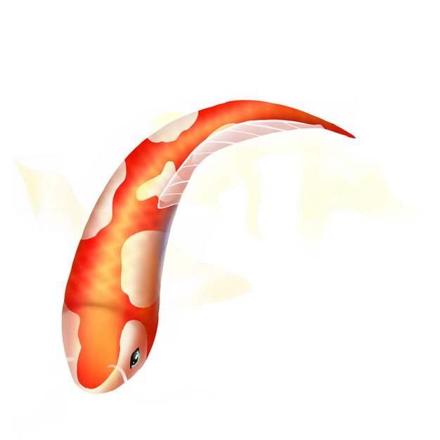 一条美丽的锦鲤鱼545171图片素材