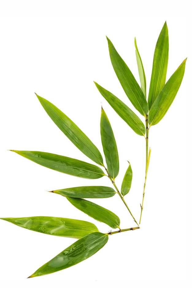 几片竹叶绿色叶子761194免抠图片素材