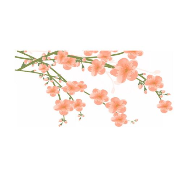 枝头上盛开的梅花水彩画267003png图片素材