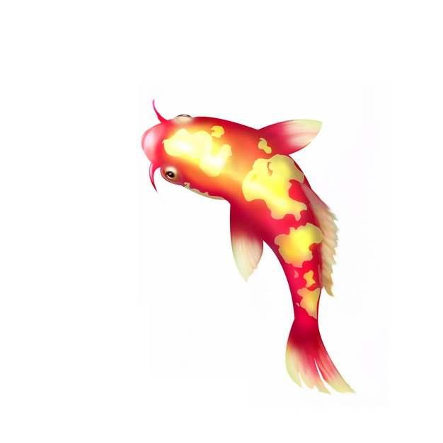 一条美丽的锦鲤鱼862592图片素材