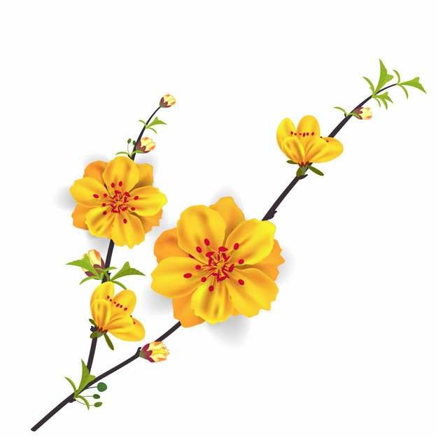 枝头上盛开的黄色花朵黄秋英215570EPS免抠图片素材