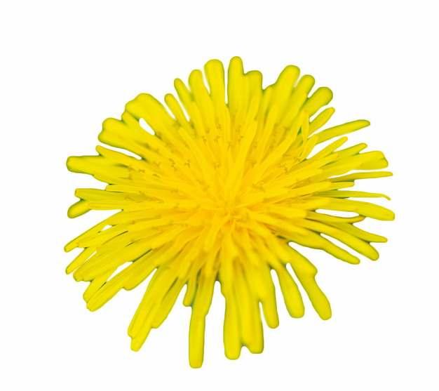 一朵盛开的黄色菊花936167png图片素材