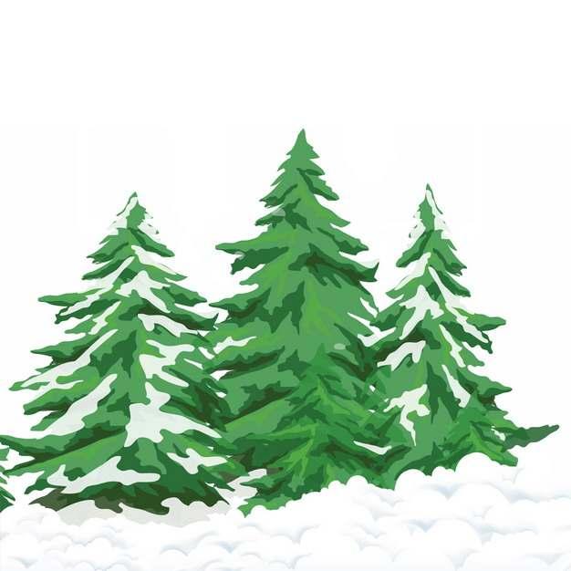 冬天的积雪和雪松大树651114png图片素材