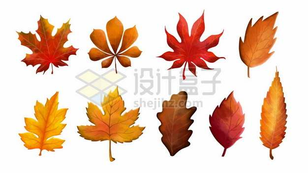 九款深秋的红色树叶枫叶落叶612960图片免抠矢量素材