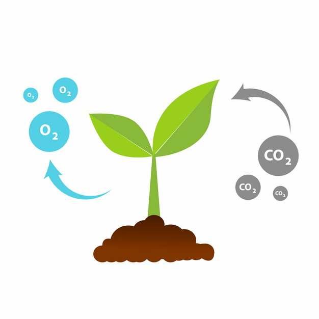 绿色的出土的植物嫩芽吸收二氧化碳通过光合作用释放氧气过程图解577434EPS免抠图片素材