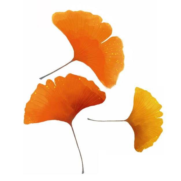 三片金黄色的银杏树叶图片免抠素材902318