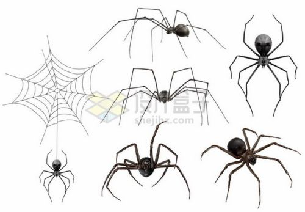 各种用蜘蛛丝织网的蜘蛛和蜘蛛网806640矢量图片免抠素材