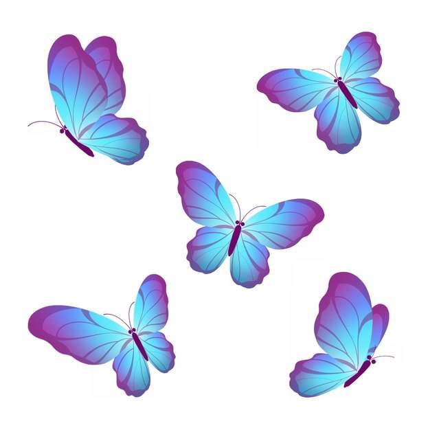 五款蓝紫色的蝴蝶327822png图片素材
