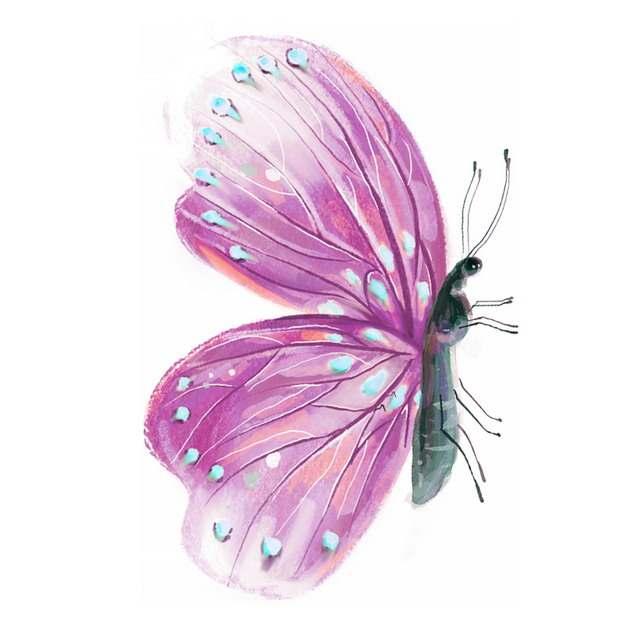 一只美丽的紫色蝴蝶水彩插画315150png图片素材