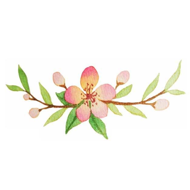 枝头上盛开的桃花水彩插画727898png图片素材