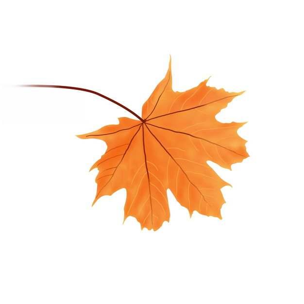 一个红色的枫叶树叶463086png图片素材