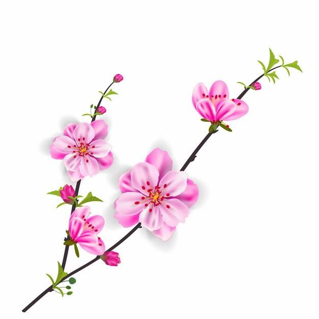 枝头上盛开的粉红色花朵桃花563937EPS免抠图片素材 生物自然-第1张