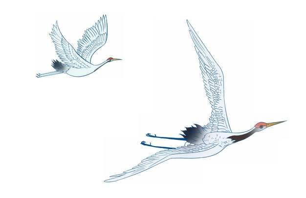 两只飞行中的仙鹤手绘插画125768图片素材
