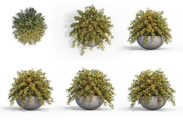 六款3D渲染的红花锦鸡儿盆栽绿植观赏植物948897免抠图片素材