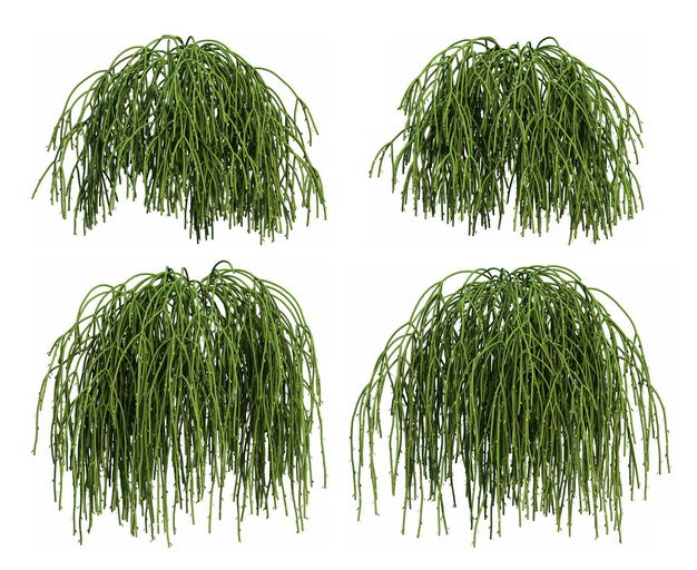 四款3D渲染的丝苇仙人掌科绿植观赏植物716567免抠图片素材 生物自然-第1张