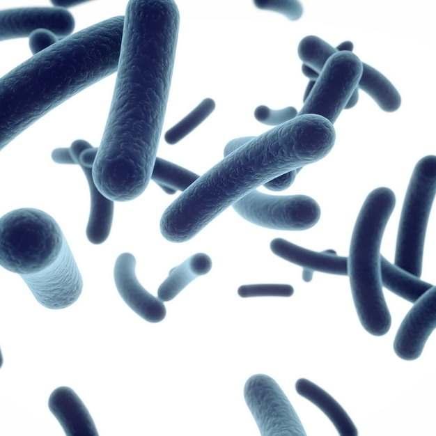 3D立体风格显微镜下的大肠杆菌629906png图片素材