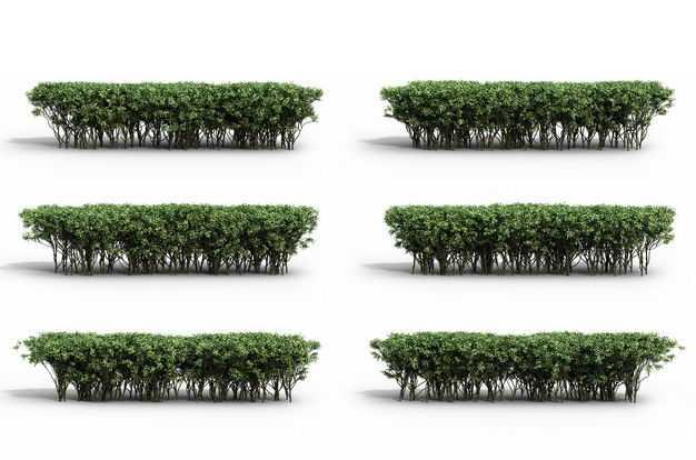 六款3D渲染的红树林灌木丛绿植观赏植物304052免抠图片素材