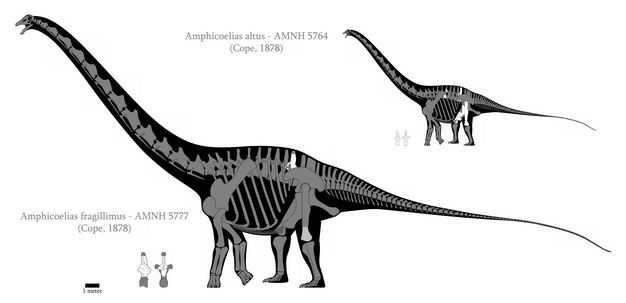 世界上最长最大最重的恐龙易碎双腔龙复原图2226021png图片免抠素材