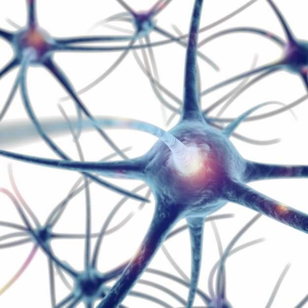 3D立体风格高清人体神经细胞267465png图片素材