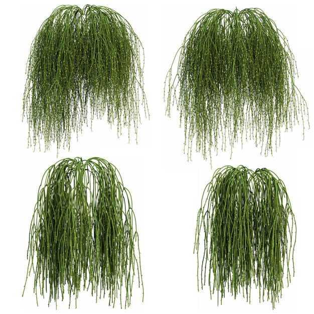 四款3D渲染的丝苇仙人掌科绿植观赏植物205734免抠图片素材