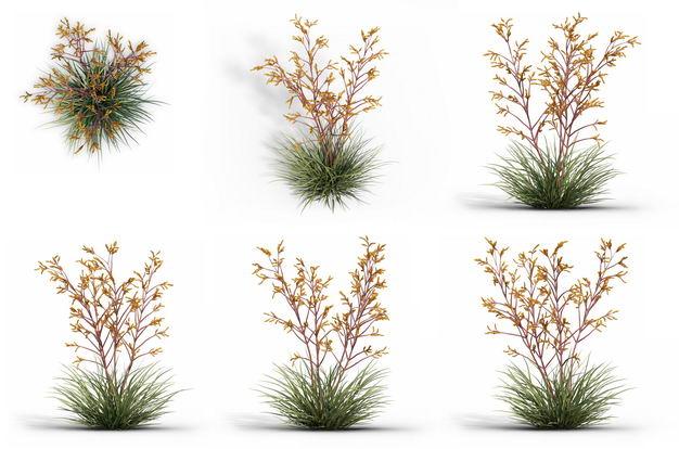 六款3D渲染的袋鼠爪盆栽绿植观赏植物820868免抠图片素材
