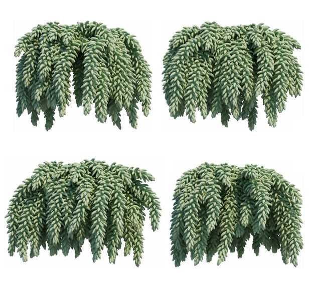 四款3D渲染的翡翠景天串珠草绿植观赏植物723814免抠图片素材