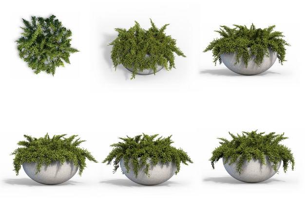 六款3D渲染的天门冬盆栽绿植观赏植物700813免抠图片素材