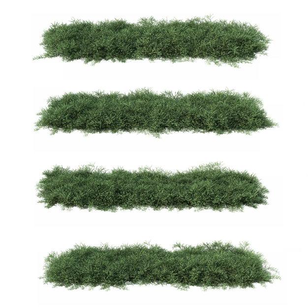 四棵3D渲染的侧柏灌木丛盆栽植物盆景454944PSD免抠图片素材 生物自然-第1张