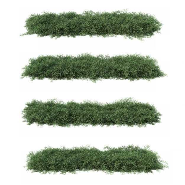 四棵3D渲染的侧柏灌木丛盆栽植物盆景454944PSD免抠图片素材