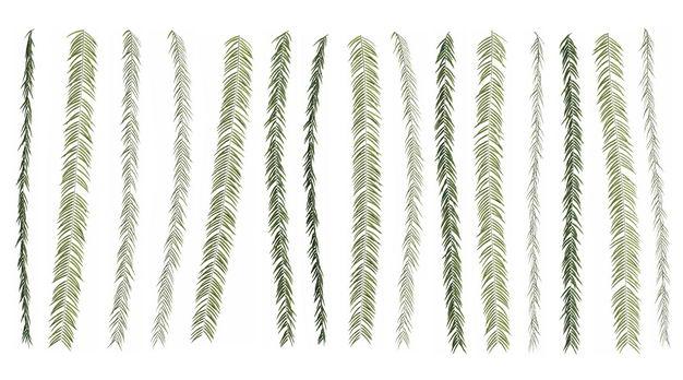 各种3D渲染的蕨类植物的树叶绿叶子943706免抠图片素材 生物自然-第1张