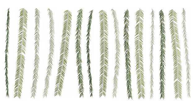 各种3D渲染的蕨类植物的树叶绿叶子943706免抠图片素材