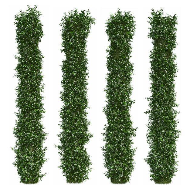 四款3D渲染的垂叶榕茂盛的绿萝绿植观赏植物402189免抠图片素材